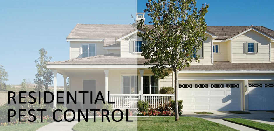 Residential Pest Control Services in Atlanta