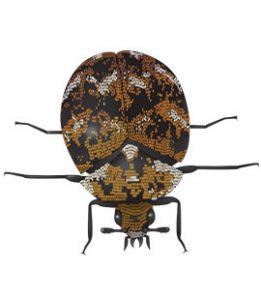 Carpet Beetles Common Household Pests In Georgia Carpet