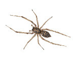 house-spider-in-sugar-hill-ga