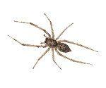 house-spider-in-sugar-hill-ga