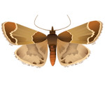 indian-meal-moth-in-atlanta-ga