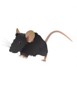 mice-in-suwanee-ge