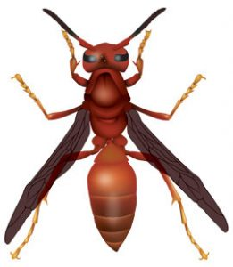 red-paper-wasp-in-buford-ga