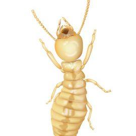 Sugar HIll Georgia Termite Control